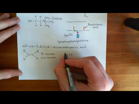 Insulin Synthesis and Secretion Part 7