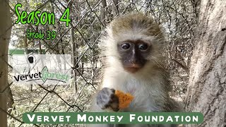 We surprised with another orphan baby monkey arrival, Floki makes new friends, Dirkules returns home