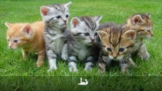 أسماء حيوانات المزرعة وأصواتها باللغة العربية - أسماء الحيوانات - أصوات الحيوانات - حيوانات المزرعة