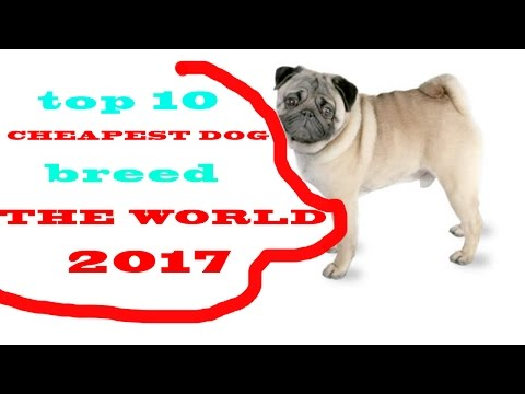 Top 10 Cheapest Dog Breeds In The World 2017