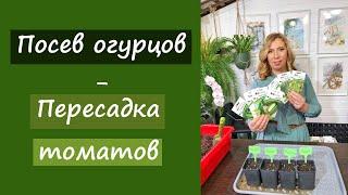 Посев огурцов и пересадка томатов