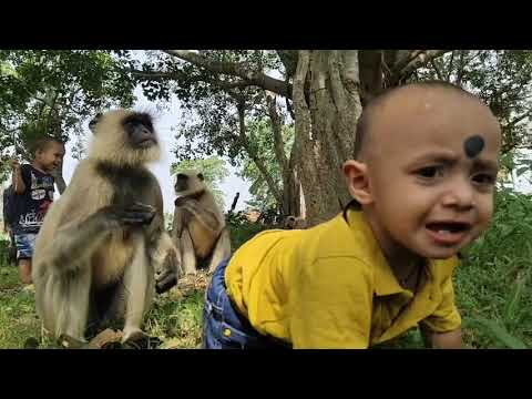 Baboons understands the baby