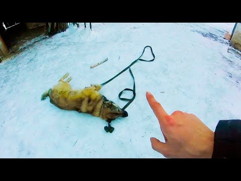 Как дрессировать дворнягу щенка