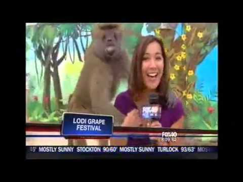 Baboon Grabs Female TV Reporter's Breasts And Smiles Like Creepy Molester - Sabrina Rodriguez