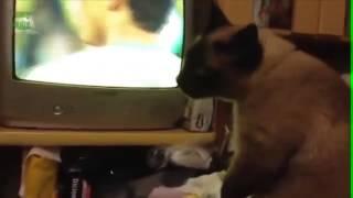Видео   Кошки и собаки смотрят Чемпионат Мира по футболу 2014   Видеоролики на Sibnet