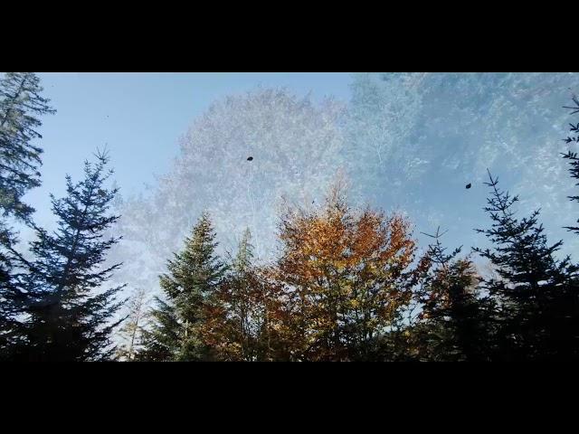 Segway Alm Tour im Herbst zur Tregler Alm im Raum Rosenheim