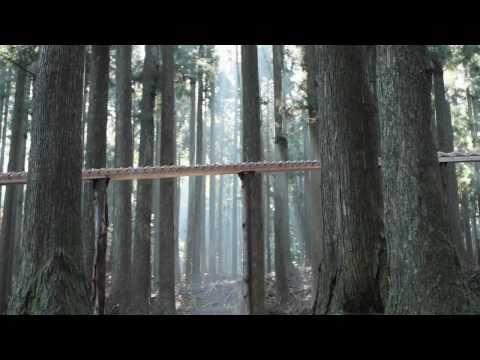 עצים מוסיקליים