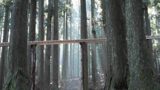 Giant Forest Xylophone Plays Bach