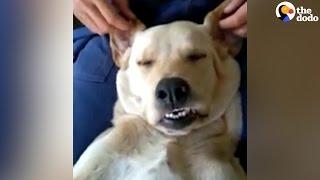 Dog Gets A Massage