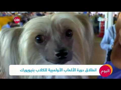 منافسة محتدمة على لقب افضل كلب  - 14:23-2018 / 2 / 13