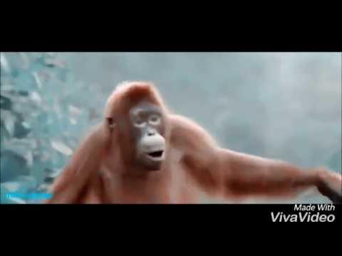 Masterkraft ft wizkid- odoo (funny monkey dance)