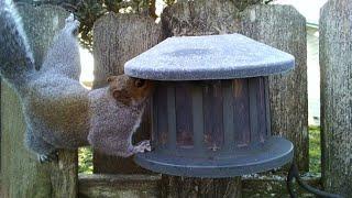 Squirrel nut bin - episode 3