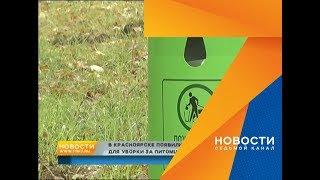 Как красноярцы реагируют на урны с пакетами для уборки за собакой: отвечает активистка