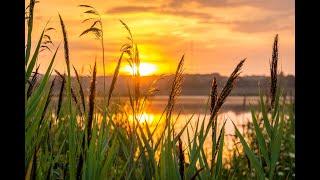 وسيقى الصباح الجميل ستشعر بطاقة السعادة والحيوية Beautiful music morning no copyright screenshot 5