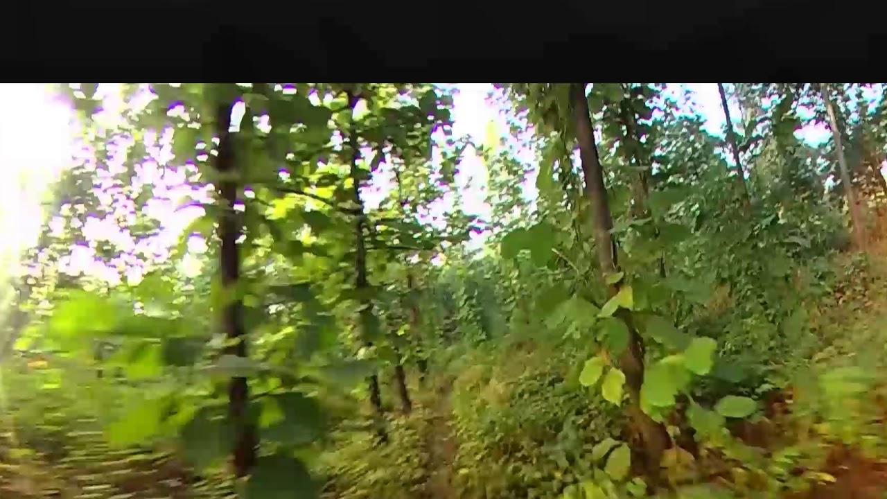 Mountain Bike - Teca Trees Forest - Ecuador