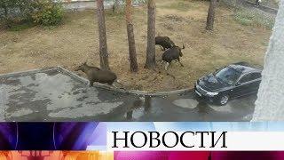 Свидетелями необычной дуэли стали жители одного из городов Пензенской области.