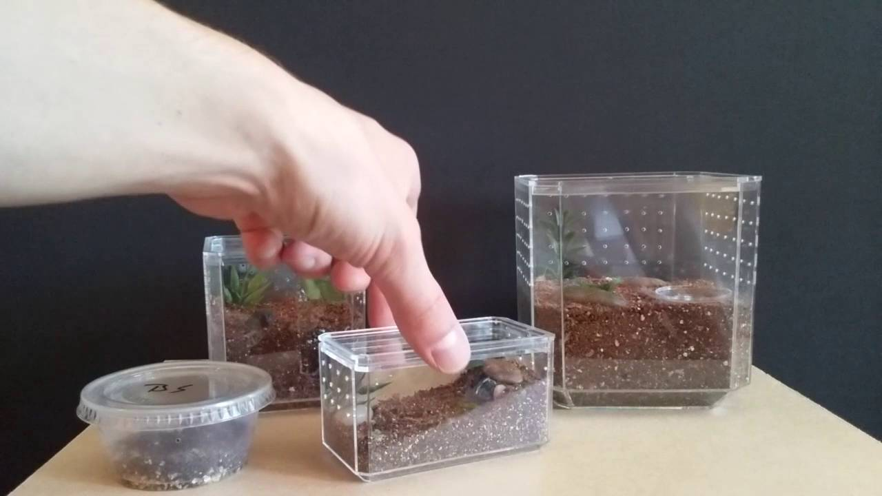 Easy Spiderling And Tarantula Enclosures From Hobby Lobby Display