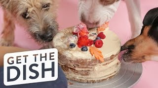 Puppy-Friendly Cake | Get the Dish