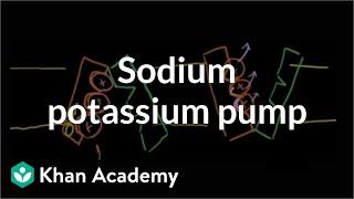 Sodium-potassium pump | Cells | MCAT | Khan Academy