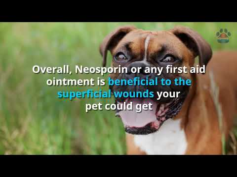 Can You Use Neosporin On Dogs? [ALL The Information You Need]