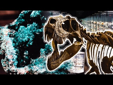 A Cinematic Tour of The Carnegie Museum of Natural History