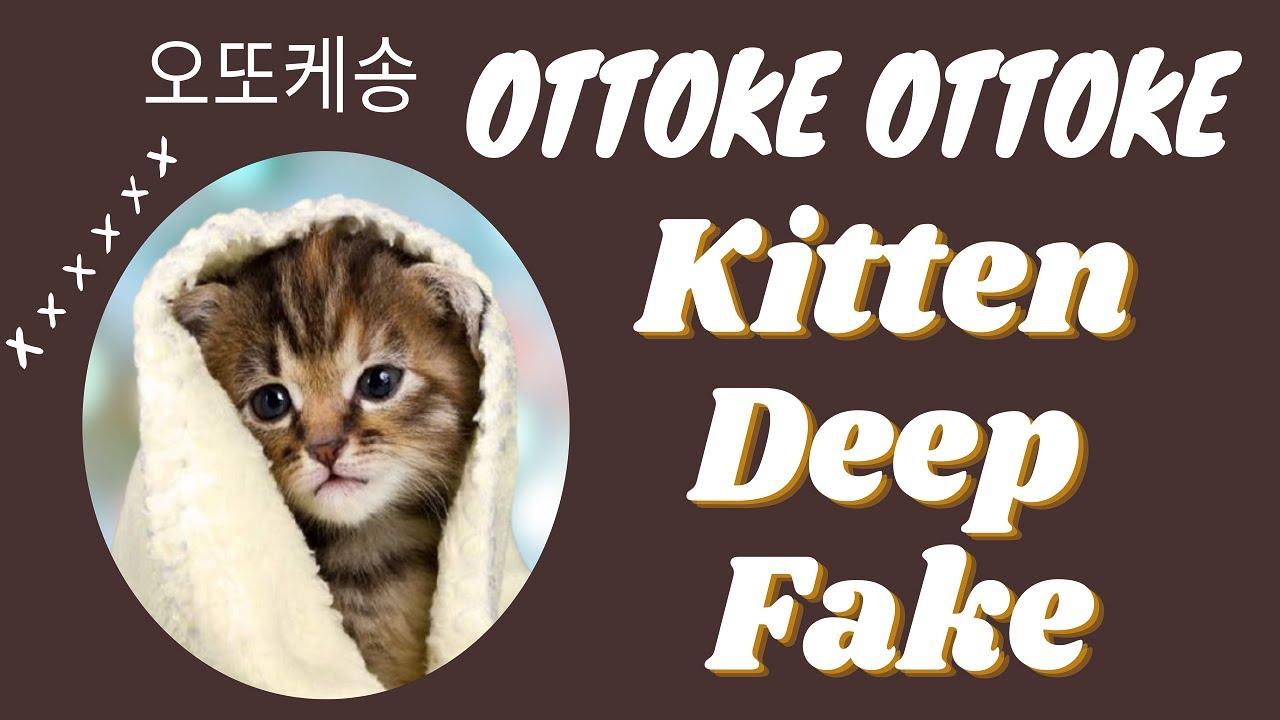 Kitten Sing Ottoke 오또케송???