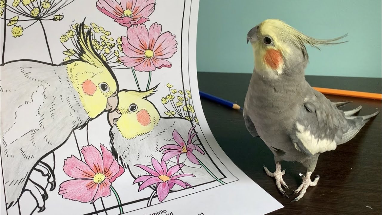Coloring In With Birbs