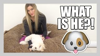What kind of dog is Matty?! | iJustine