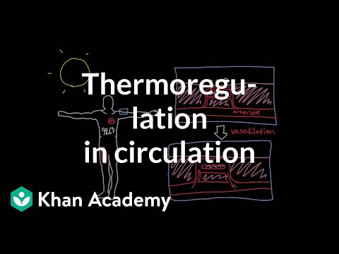 Thermoregulation in the circulatory system | Circulatory system physiology | NCLEX-RN | Khan Academy