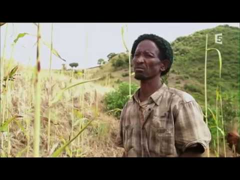 Documentaire  Du miel et des hommes