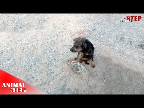 Paralyzed Stray Dog Found Where He Has Never Been and Feels Safe