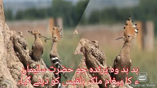 Birds of Potohar.
