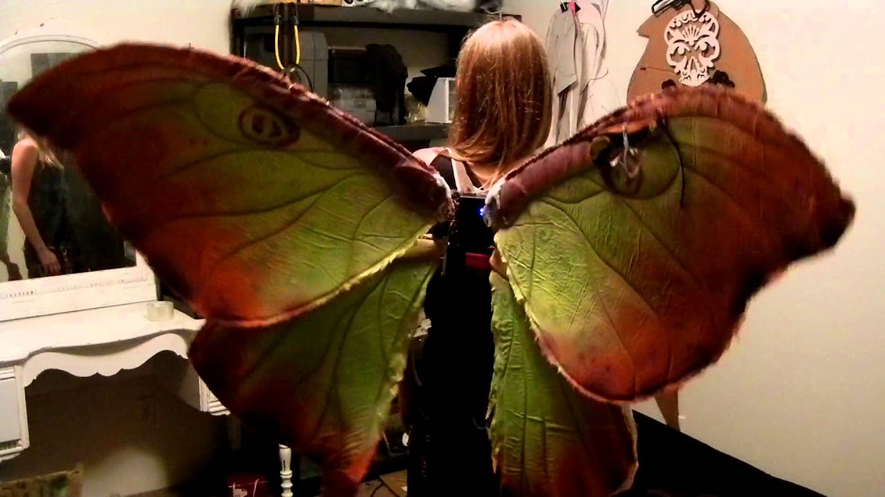 Animated Dragon Wallpaper Free Animatronic Moth Wings Test Youtube