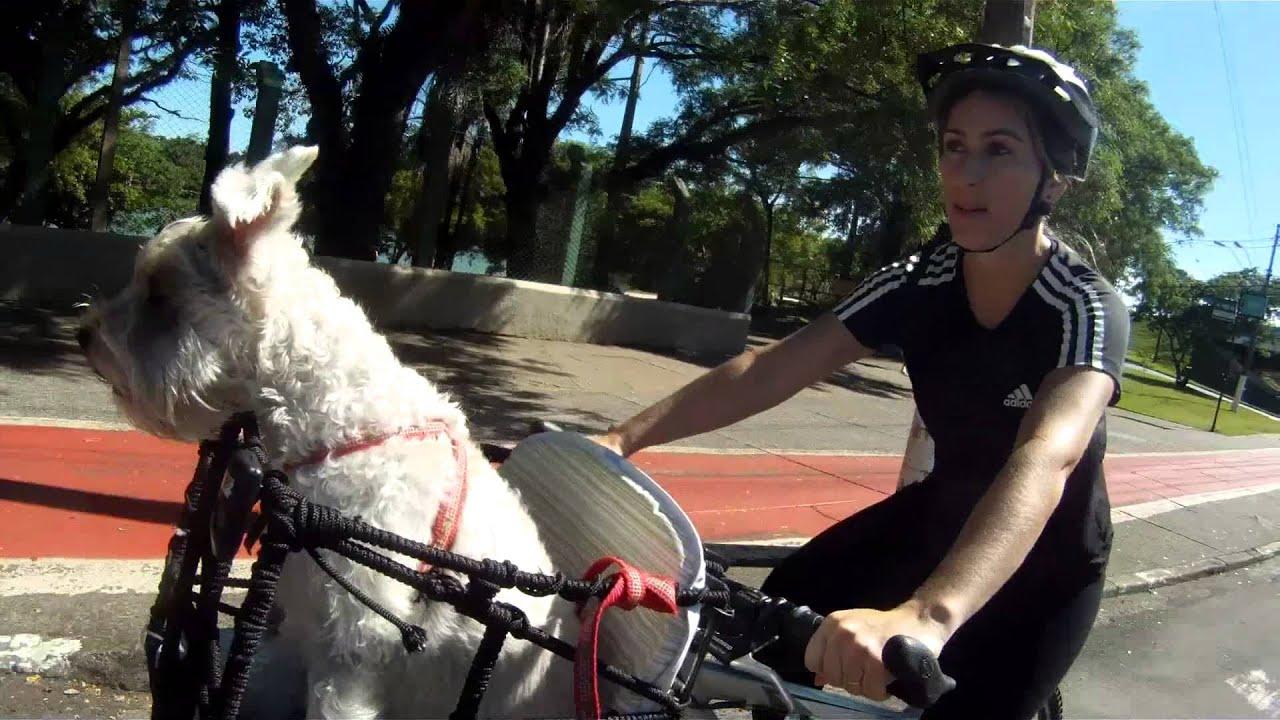 Bolsa Para Levar Cachorro Na Bicicleta : Testando a cesta de bike para sofia