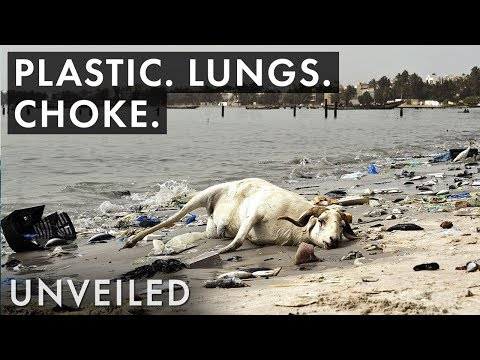 What If Plastic Pollution Gets Even Worse?    Unveiled