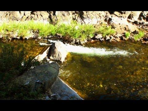 Kunthi River, Silent Valley