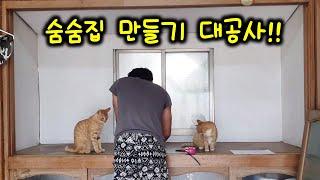고양이 숨숨집 만들기(고양이 보다 빠른 눈치 빠른 스피드)