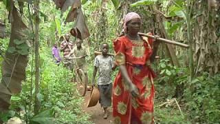 Millions Fed: Combating Cassava Mosaic Disease