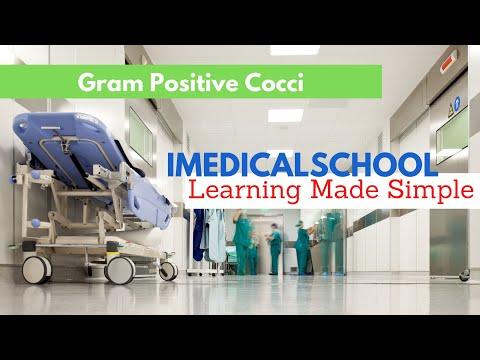 Medical School - Bacteria - Gram Positive Cocci