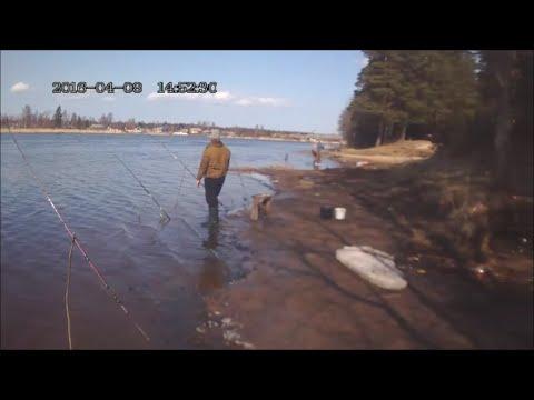 открыли сезон летней рыбалки в Усть-Луги
