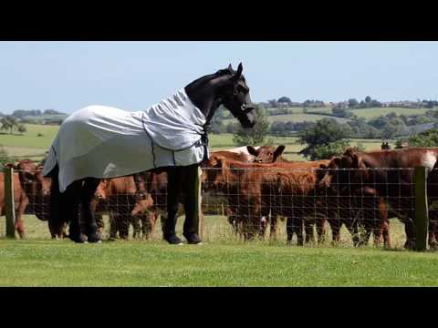 Elegant Friesian horse meets the neighbours cows. SO FUNNY, what a horse!