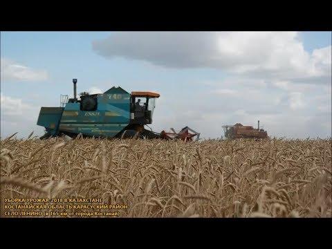 Уборка-2018 урожай в Казахстане Костанайская область Карасуский район село Ленино