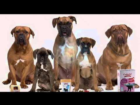 Por qué una dieta casera para perros no funciona
