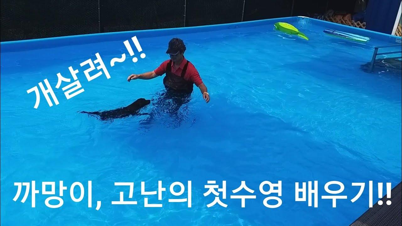 까망이, 애견수영장 가다! 고난의 강아지 첫수영 배우기!!