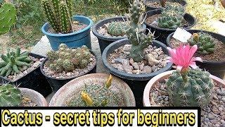 Cactus - Secret tips for beginners