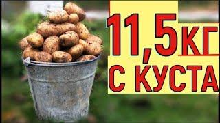 видео Как собрать большой урожай картофеля?