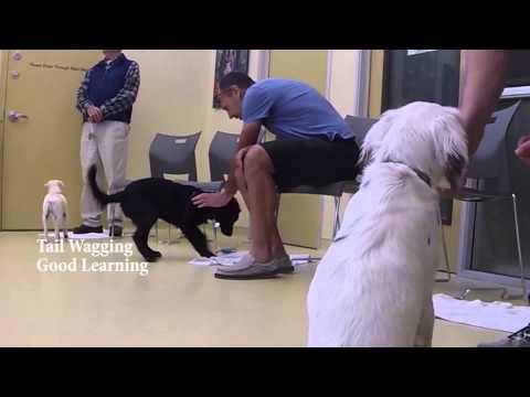 Puppy Preschool & Kindergarten at the SPCA