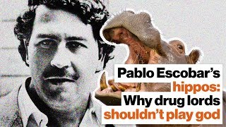 Pablo Escobar's hippos: Why drug lords shouldn't play God | Lucy Cooke