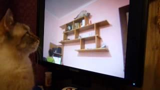 Кот смотрит видео с кошкой