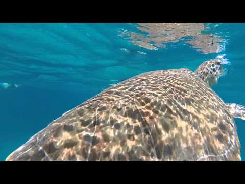 St  Thomas US Virgin Islands Snorkeling, Shipwreck, Swimming Aside Sea Turtles And Coral Reef GoPro